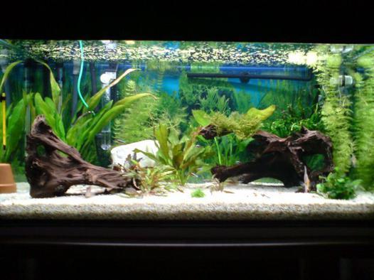 aquarium eau chaude