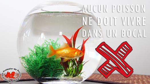 bocal a poisson