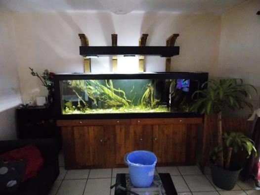 créer son aquarium