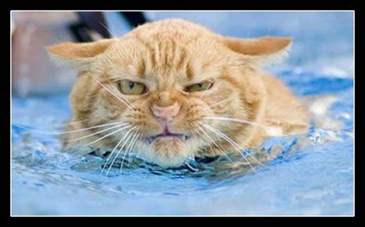 eau chat