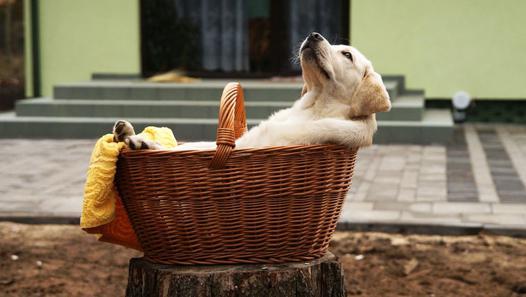etre relaxe