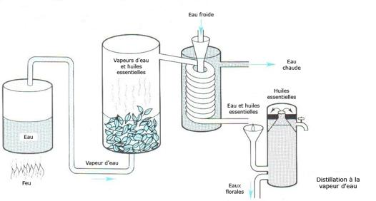 fabrication huile essentielle maison