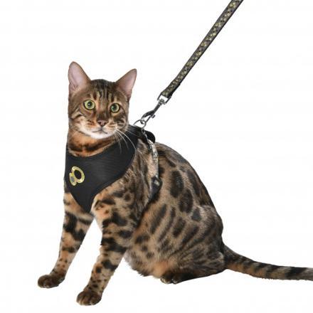 harnais chat