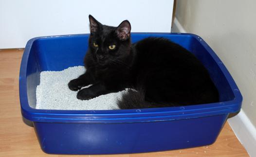 la meilleure litière pour chat