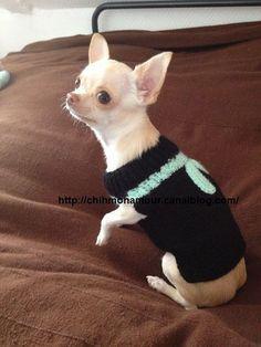 manteau chien chihuahua