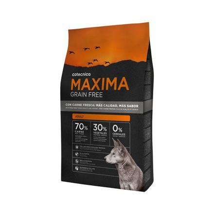 maxima chien