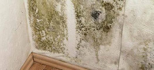 nettoyer les moisissures sur les murs